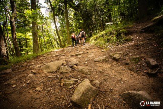 rando-survie-vosges-trekking
