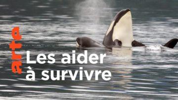 [Documentaire] Orques en danger !